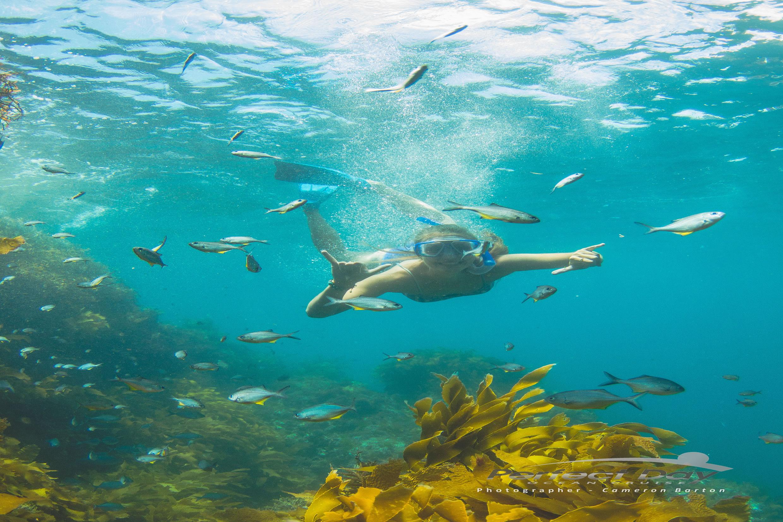 Dive in Tutukaka, New Zealand