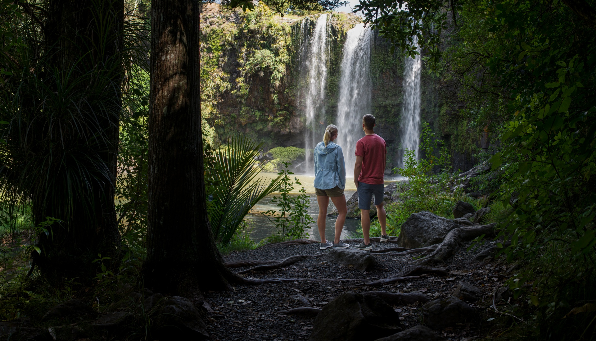Whangerei Falls, Northland